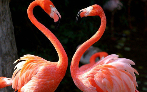 10-Flamingo-love.jpg